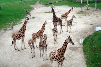 Czech zoos