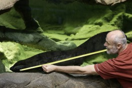 Prague zoo claims to have the biggest salamander