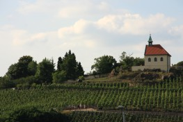 The vineyards of Prague