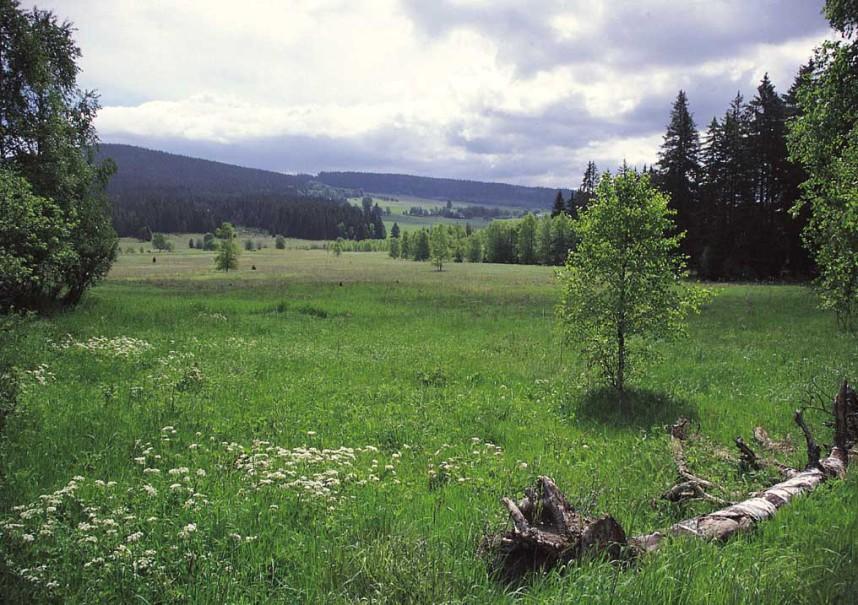 Sumava National Park