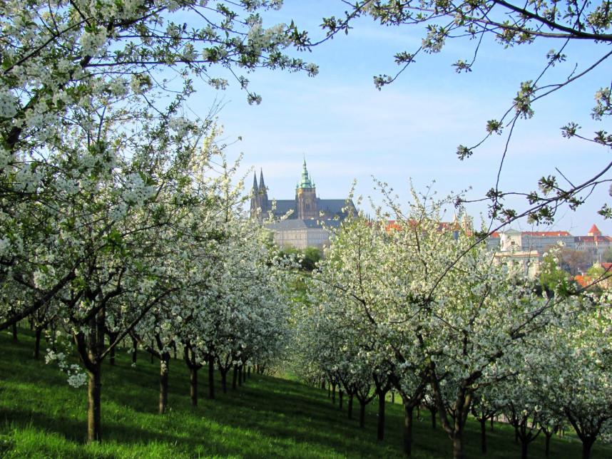 Letna Orchards