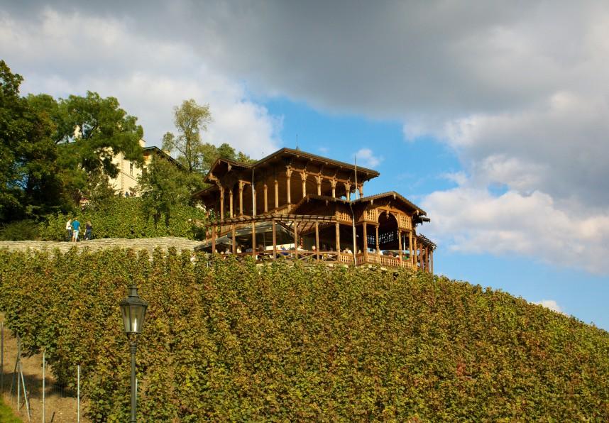 Vineyards in Czech