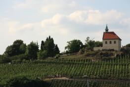 The vineyards of Prague